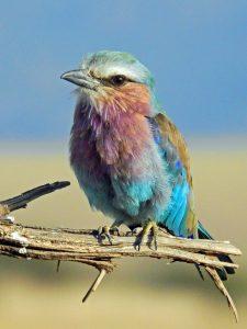 oiseau-colore